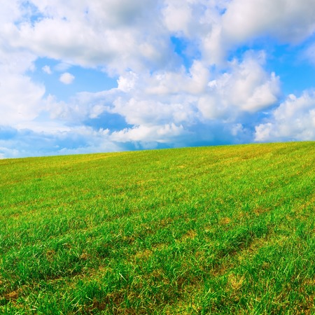 bright sky: Landscape with field of green grass and blue sky with clouds. Bright summer sunny day.