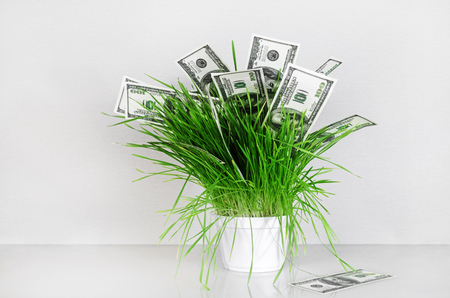 fake money: Dollars in grass. Hundred dollar bills in a pot with green grass on a gray background. Fake money. Conceptual image on the business theme.