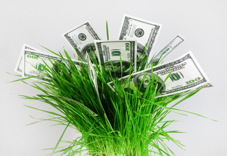 fake money: Money in grass. Many one hundred dollar bills in a pot with green grass on a gray background. Fake money. Business concept. Stock Photo