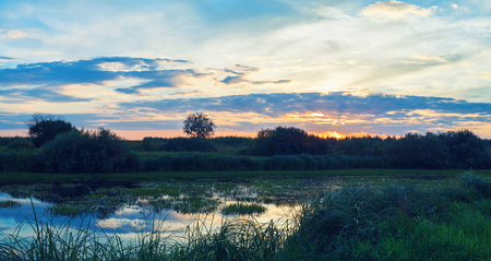 Sunset in the countryside. Summer landscape. Pond overgrown with sedges. Toned image.