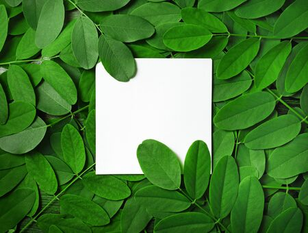 Blank white paper background with green leaves. Square frame. Nature concept. Copy space for text. Flat lay.