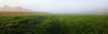 Meadow in the fog. Green grass field in the countryside. Rural landscape. Panoramic shot.