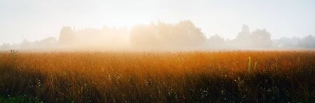 Foggy morning in the countryside. Rural landscape. Golden grass and silhouettes of trees in the fog. Panoramic shot.