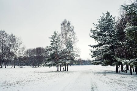 Scenic winter landscape. Fir trees, birches and snow-covered country road.