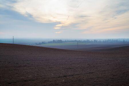 Arable crop field. Evening agricultural rural landscape.