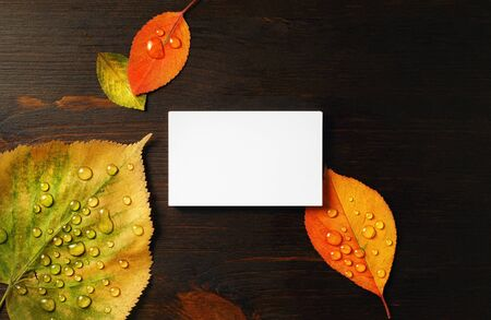 Blank business card and bright autumn leaves on wood table background. Flat lay.