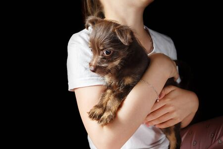 Cute brown puppy dog in the arms of a child. Stock fotó - 135498921