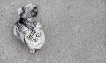 Grey tabby cat on asphalt background. Animal looking at the camera. Shallow depth of field. Selective focus. 스톡 콘텐츠
