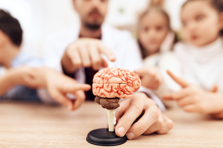 Children with teacher looking at a model of the human brain. They have a lesson in biology school.