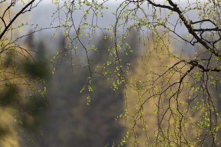 streifzug: Nat�rliche Hintergrund, Fr�hling Niederlassungen Lizenzfreie Bilder