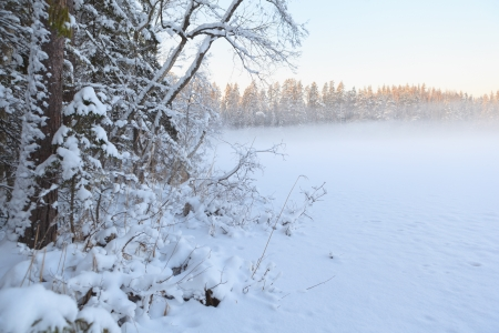 The frozen winter lake in wood under snow photo