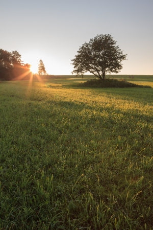 One tree in the field on sunrise Stock Photo - 17233988