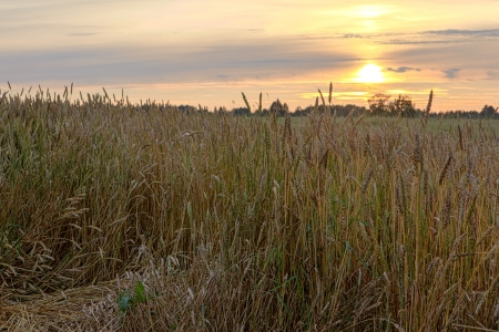 Sunset over an oblique field. A natural background Stock Photo - 17488703
