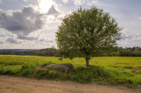 One tree on an oblique field in the summer evening, a landscape Stock Photo - 17488777
