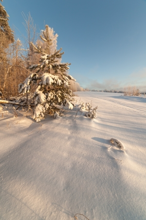 brink: Trees on the brink of a winter snow-covered field Stock Photo