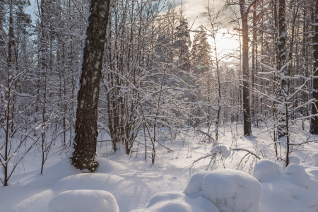 Winter snow wood in solar weather landscape