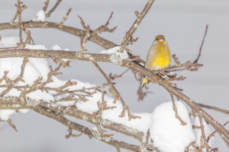 Bird sitting on branche in the winter photo