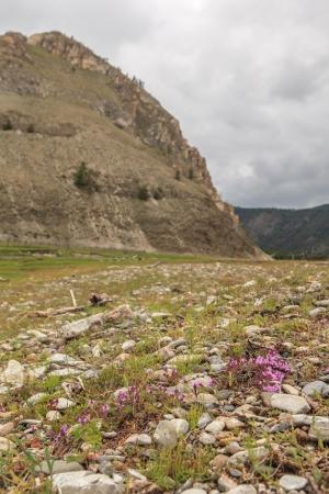 water thyme: Creciendo tomillo en las monta�as. Un paisaje.