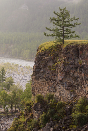 breakage: Alerce en la rotura en el r�o. Un paisaje de verano. Foto de archivo