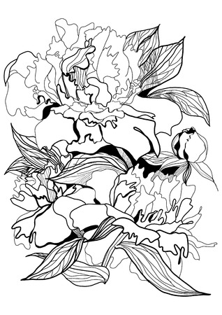technics: drawing peony monochrome graphic sketch illustration
