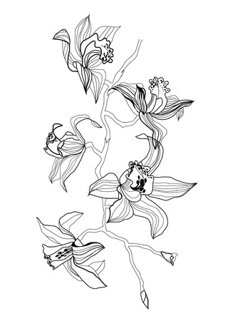 monocrom�tico: orchid branch drawing on white background