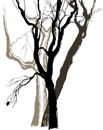 old trees drawing  graphic  sketch