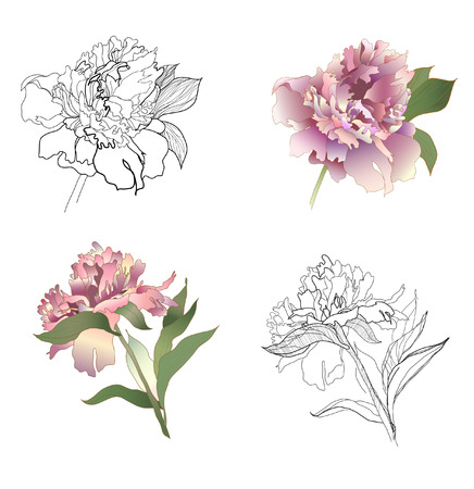 peony black and white and coloured set