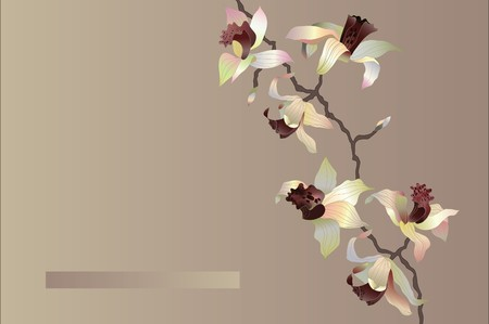 orchid card Vector