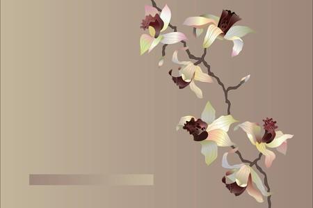 orchid card Illustration