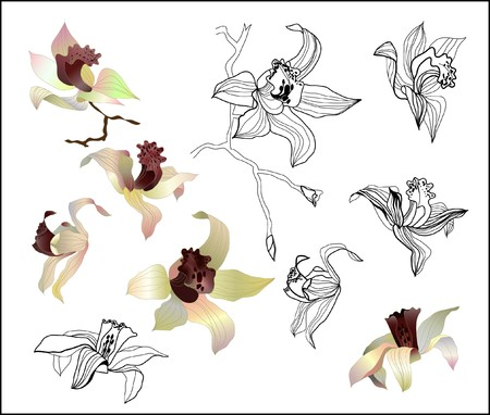 orchid branch  set Stock Vector - 7480799
