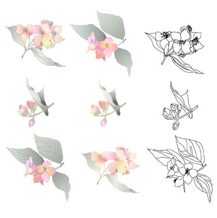 jasmin branch Illustration