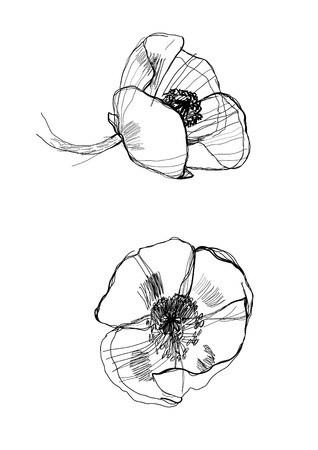 drawing poppy monochrome graphic sketch Stock Vector - 7484523