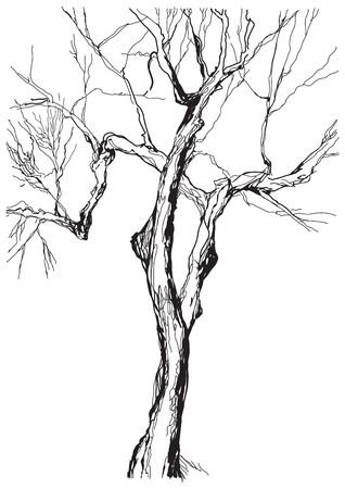 technic: old tree