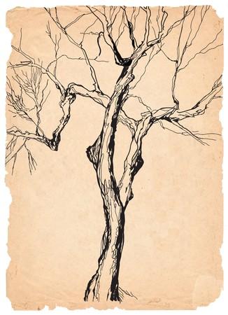 prin: l�piz de papel shabby �rbol viejo de dibujo  Foto de archivo