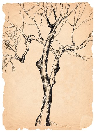 old tree shabby  paper  pen drawing photo