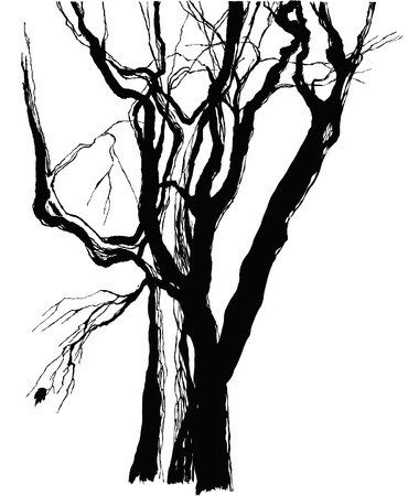 tree sketch: old trees drawing  graphic  sketch