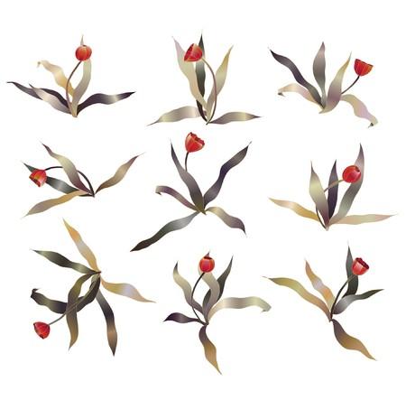 tulipe rouge: ensemble de croquis de tulipes rouge