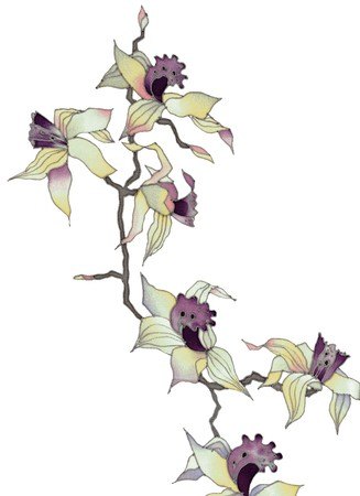 Image of my artwork with a orchid branch on white background  photo