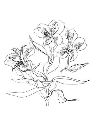 flower print: Alstrameriya flower brush drawing
