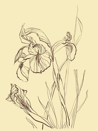 Iris flower brush drawing on beige  background Illustration