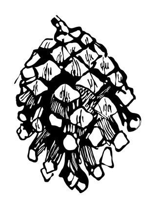monochrome pen drawing fir-cone  Vector