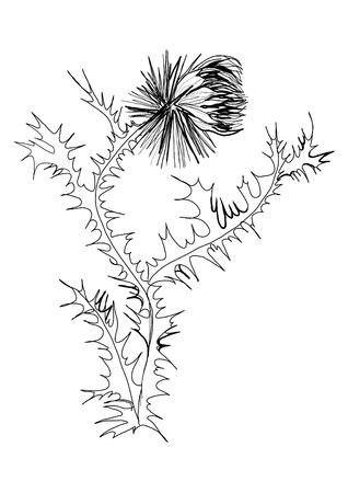 distel: Zeichnen von schwarzen und wei�en Thistle Skizze Illustration