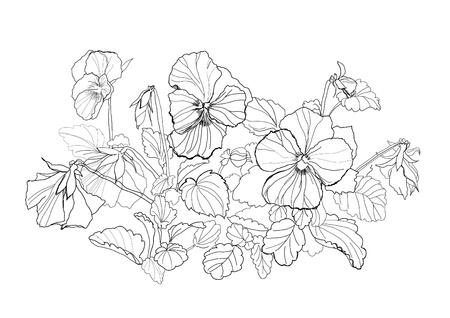 violas: viola flowers drawing on white background Illustration