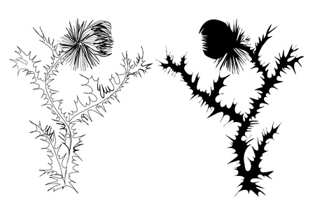 thistle plant: drawing thistle black and white and silhouette Illustration
