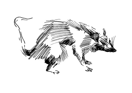 rat hand drawing black and white sketch
