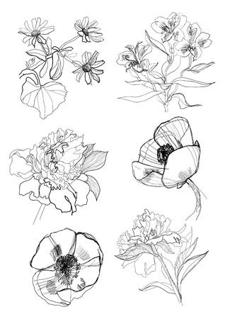 peony black: Flowers set drawing on white background Illustration