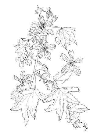 plant with flowers Vector