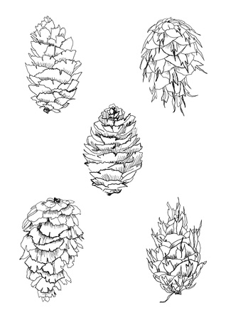 black and white cone: hand drawing tree cones set