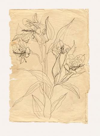 technics: Alstrameriya flower drawing on old paper background