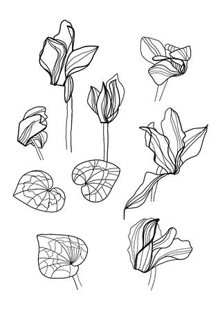 cyclamen: cyclamens pen drawing set